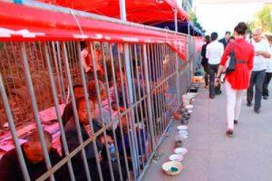 China: instalan jaulas en la calle para que mendigos no molesten al turismo